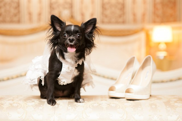 Hund neben Schuhen von Braut