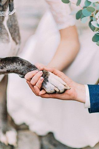 Gib Pfote Hundefoto Hochzeit