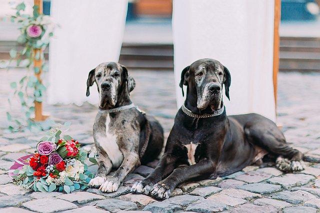 Hochzeitsfoto mit 2 großen Hunden