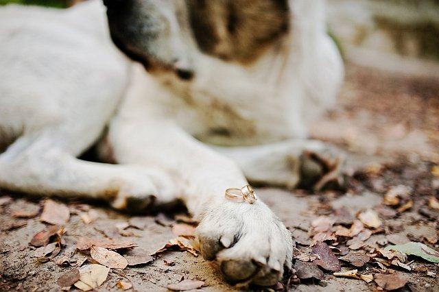 Hochzeitsfoto Hund mit Ringen