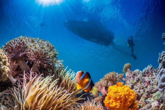 Unterwasser Fotografie Tipps